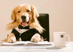 宠物交易平台,宠物狗
