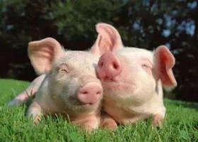 畜牧养殖商城,专业的畜牧,养殖、兽医交易平台